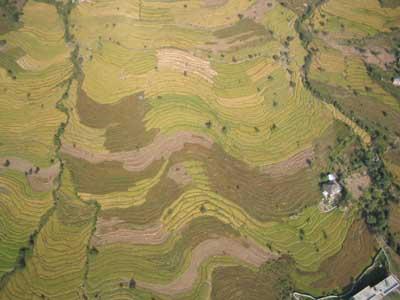 Gestern fotografiert, heute als Landeplatz genutzt: das abgeernete Reisfeld am untern Bildrand